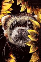 ferret in sunflowers by andante-ace