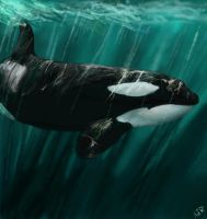 Orca Icon by Moray-orca