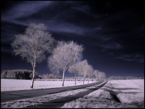 Country Road infrared... by MichiLauke