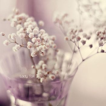 Baby's Breath by Lady-Tori