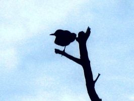 Silhouette of a Bird by Natalie526