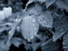 droplets... by ahmedwkhan