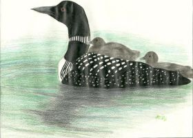 Common Loon by ShelbyGT-500KR