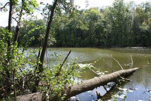 Lake at Henry Ford Estate by elvaniel