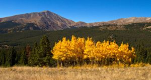 The Grove and Mt Silverheels by eDDie-TK