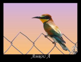 Colorful bee eater by AMROU-A