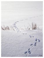footprints in the snow by Niophee