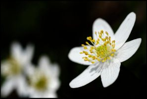 flower 10 by mikeb79