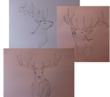 Deer sketch collection by CaledonCat