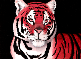 Red Tiger by unistar2000