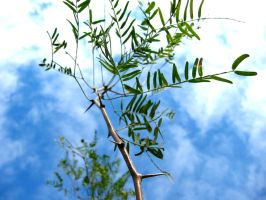 Thorny Plant by squeet