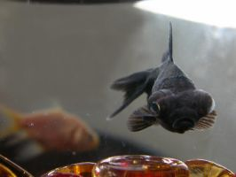 fish by Photogenetic