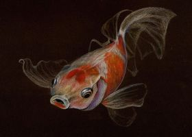 gold fish by illi33