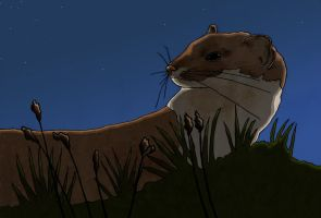 Stoat at dawn by Origami-Octopus