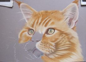 Siem W.I.P. Cat in pastel by mo62