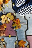 autumn leaves and sneakers by Kitty-Kitty-Kit-Kat