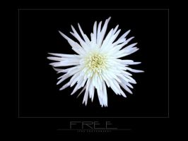 Free by jteh