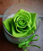 green rose by lonardi