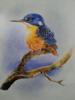 Redraw Azure Kingfisher-the Art of Jeremy Boot by indrivs