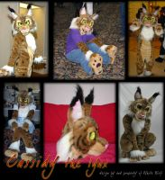 Cassidy Lynx Fursuit by whitewolf