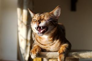 The Graceful End Of A Yawn by FurLined