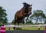 Jumping George by TheDazman