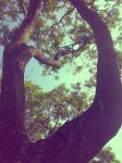 tree by lucicouto