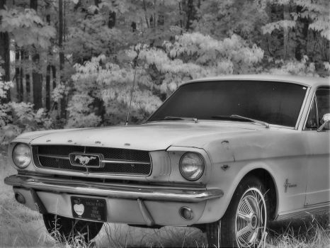 My 1st HDR IR Image-Mustang65 by redtailhawker