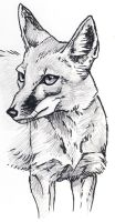 Corsac Fox by silvercrossfox