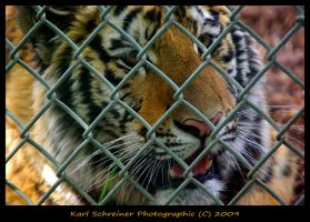 Caged Power by KSPhotographic