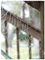 Spider Webs and Dew Drops by syah-mj