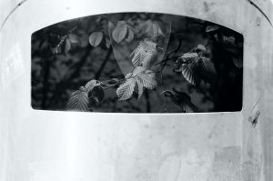 Film - XXIX - nature in the bin by Picture-Bandit