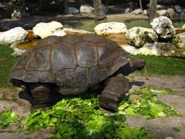 Turtle 1 of 3 by oxygenhazard