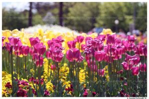 Floriade by TVD-Photography