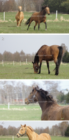 The horses at Wonnagarden by Jullelin