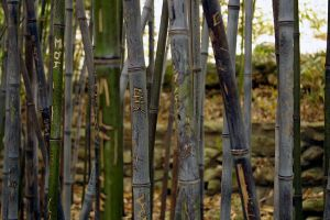 Marked Bamboo by Genuine-Atramentous
