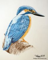 Kingfisher Profile by 5Happy5