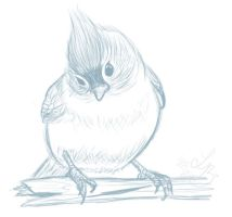 Curious Titmouse Sketch by Sharulia