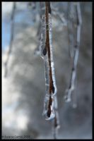 Living Icicle by Nariane