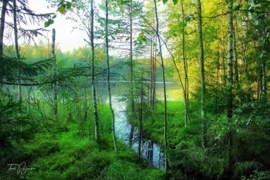 Forest pond by Pajunen
