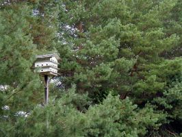 Birdhouse in the Woods by Lectrichead