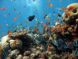 Coral Reef Scene by DesertDiver