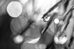 Droplet by melancholicphotos