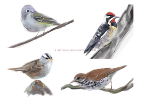 Bird Speedpaints #1 by Nimitsuu