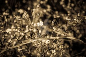 Nature IV by mikeheer