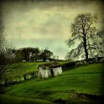 House Of Sheep by Dave-Ellis