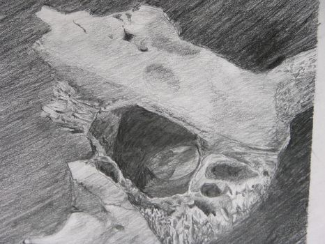 Skull close-up by StaircaseWit