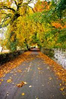 Autumn Road by CumbriaCam