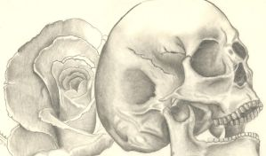 Skull and Rose by Avelict