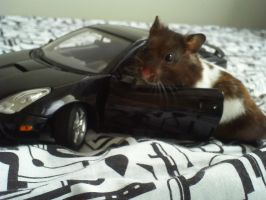 My hamster on his car by Kosmu